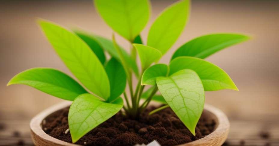 5 razloga zašto agave šećer gubi na težini