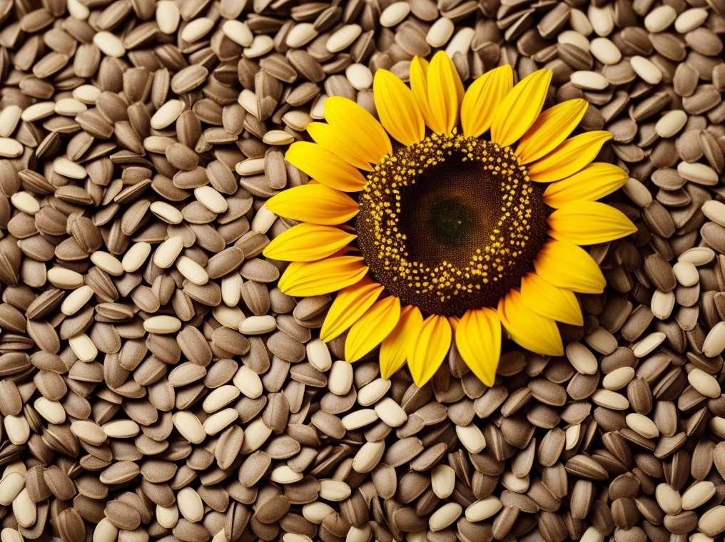 Biji bunga matahari untuk menghilangkan kedutan