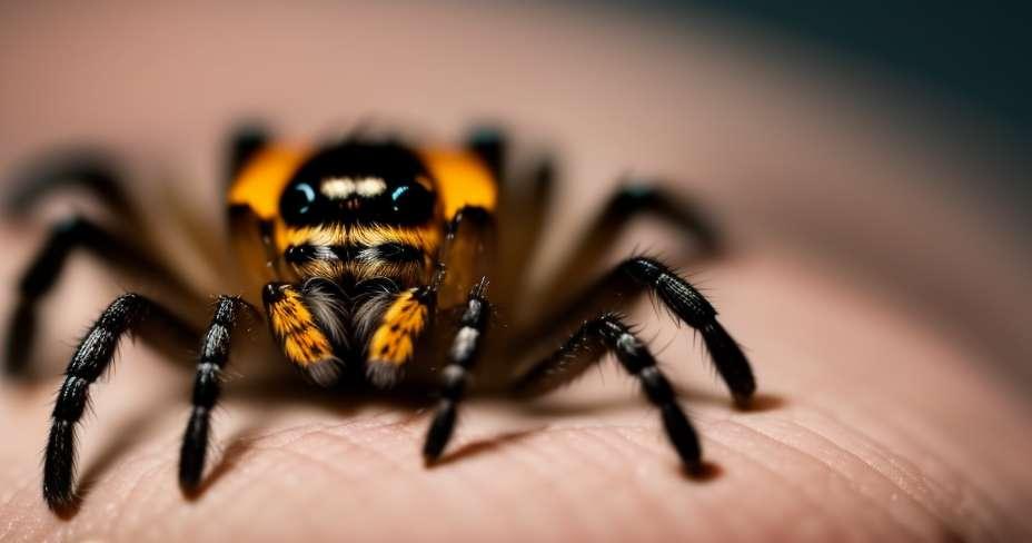 أعراض الحشرات والعضات العنكبوت