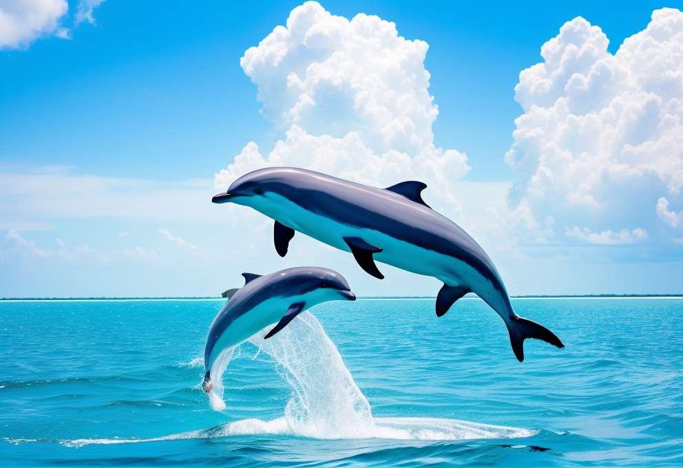 تعرف على فوائد الدلفين