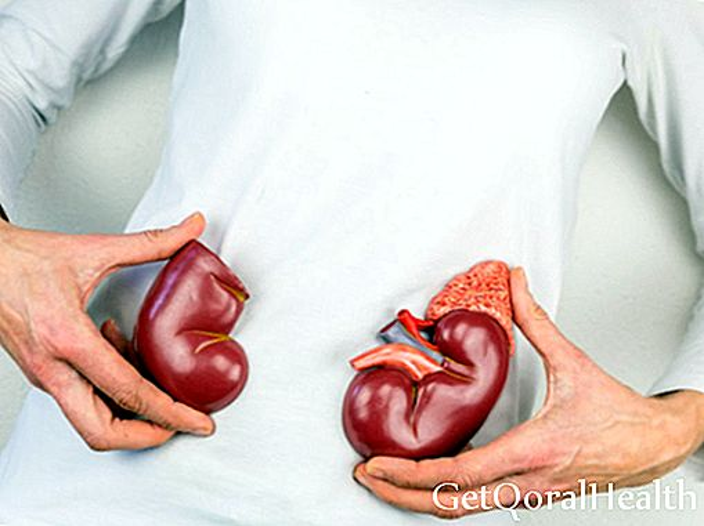 Kaj morate vedeti o presajanju organov