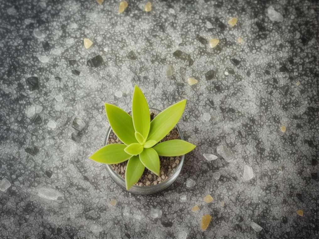 Tradicionalne alkoholne pijače iz Mehike