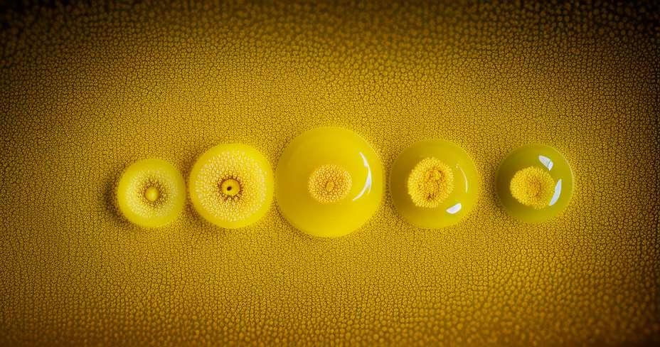 5 болести од бактерија