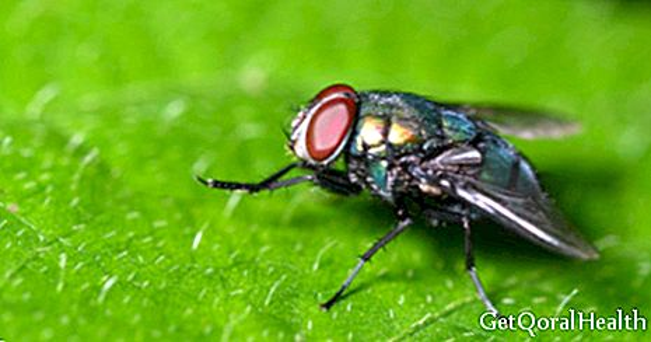 Koliko izgledamo kao muhe?