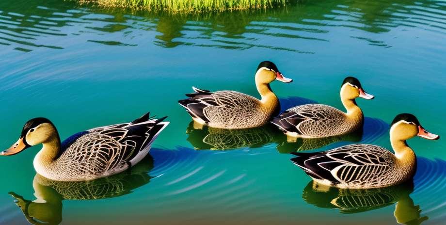 Virus mortel découvert chez des canards de Corée du Sud