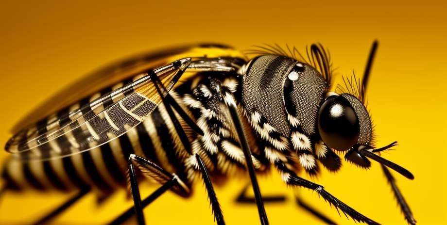 Moustiques génétiquement modifiés contre la dengue