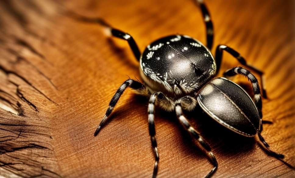 1. Houslista pavouk
