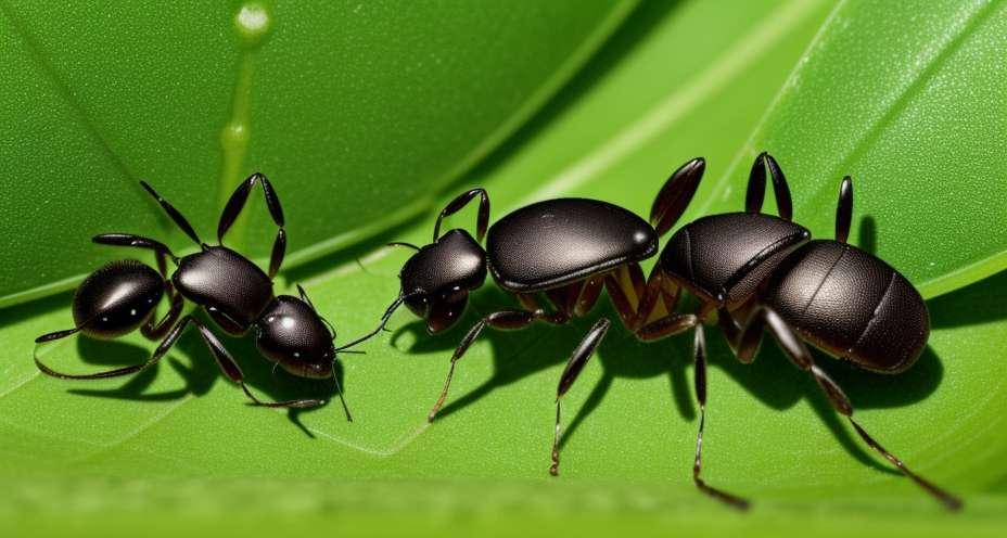 Kill the ants