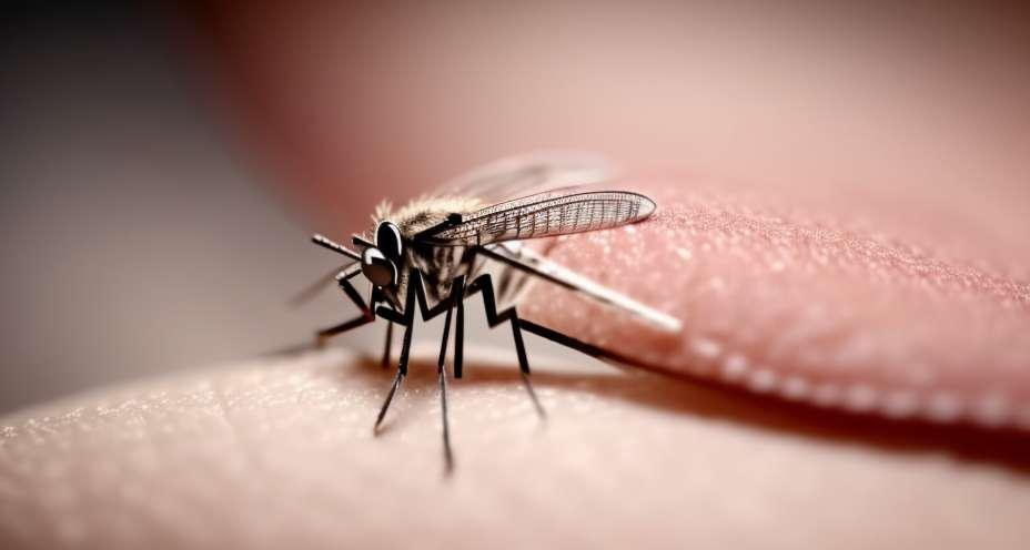 Hitze und Mücken gleichbedeutend mit Dengue-Gefahr