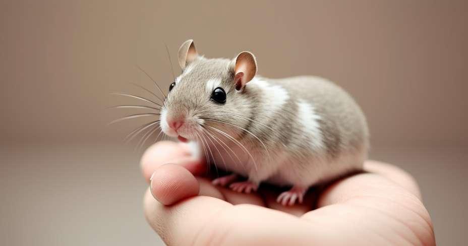 エキゾチックなペットは精神病を引き起こす