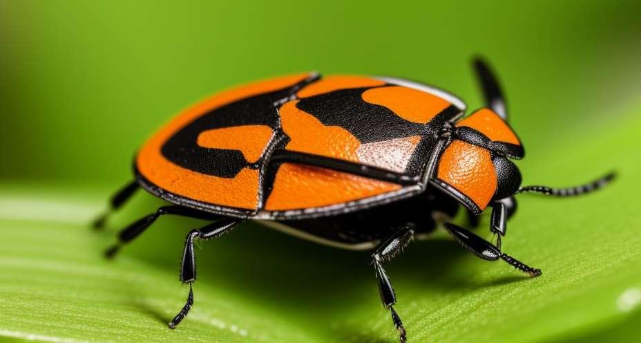 Insetti che portano la malattia di Chagas