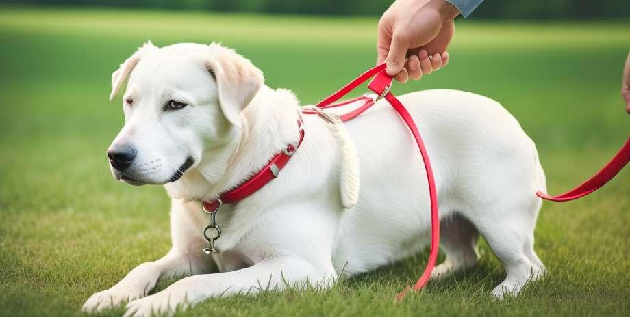 Кампања за сакупљање паса у Мексико Ситију
