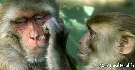 Monkeys are born with a protective gene against AIDS