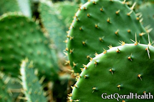New properties of cactus against osteoporosis