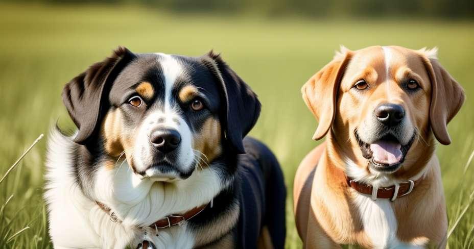 Rak debelega črevesa se lahko zazna z vonjem labradorja