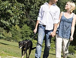 Walk with your dog and improve your physical health