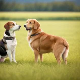 Активирајте се са својим љубимцем и изгубите тежину!