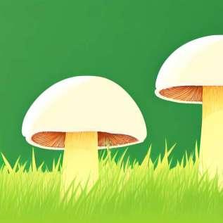 Lijekovi za uklanjanje gljivica s noktiju