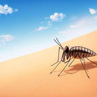 Pet zabavnih dejstev o denga