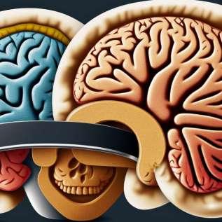 Presaditev jeter izboljša duševno funkcijo