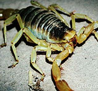 Scorpion venom could reverse cancer