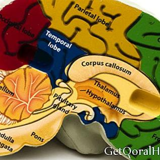 Hvordan fungerer hjernen din på en diett?